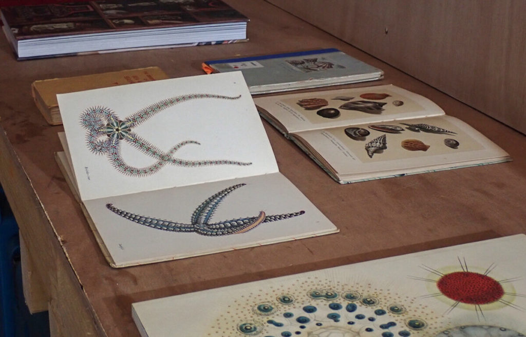 a wood table with books open on it, showing illustrations of sealife and shells
